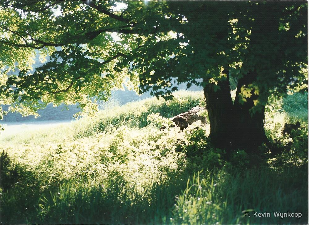 Maple Tree by F.  Kevin  Wynkoop