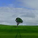 A Tree in a Field by George Crawford
