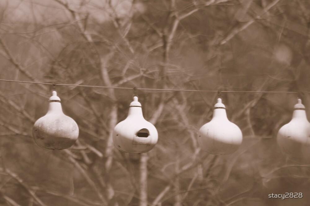 bird-feeding gourds by stacy2828