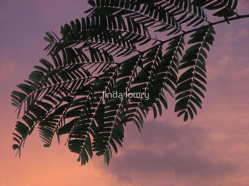 Sunset Mimosa by linda lowry