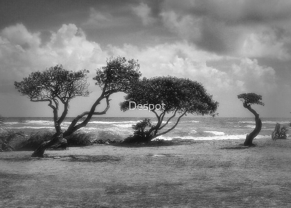 Coastal Trees by Despot