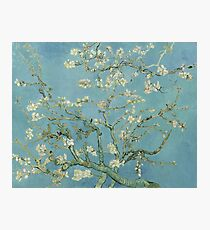 Almond Blossoms by Vincent van Gogh Photographic Print