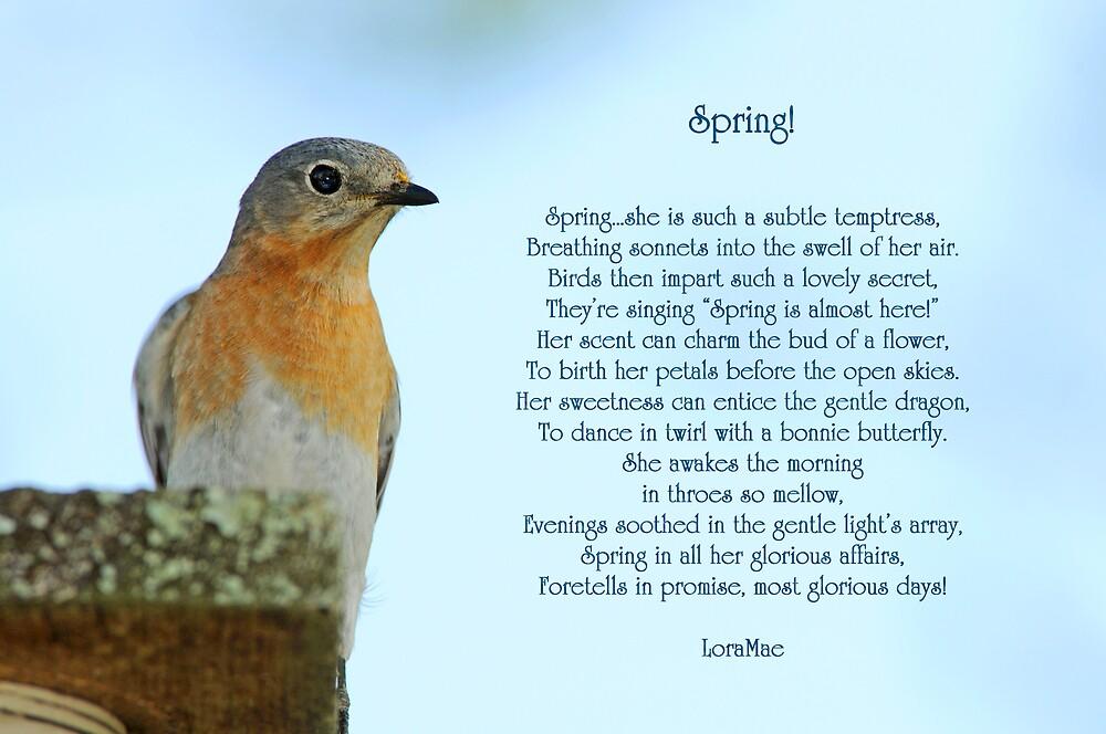 Spring! by loramae