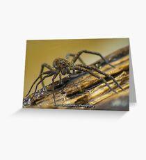 Big Wild Wolf Spider Greeting Card