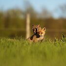 Baby Fox 2 by jamieleigh