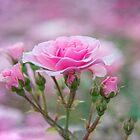 Pink roses  by LudaNayvelt