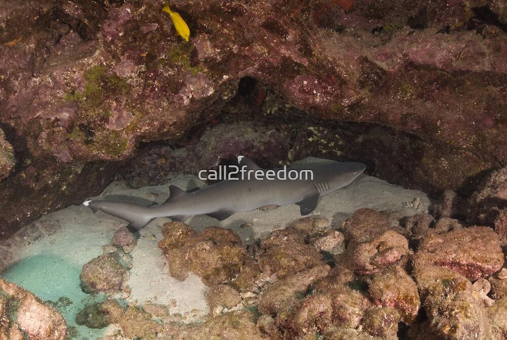 Sleeping Shark by call2freedom