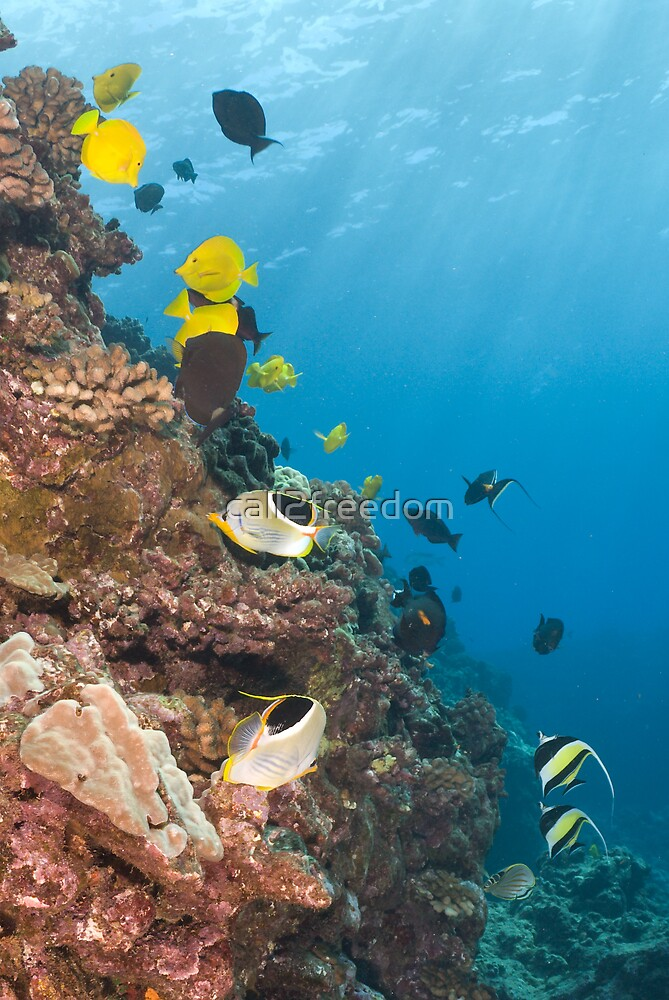 Coral Reef by call2freedom