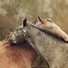 Equine Scratches by jamieleigh