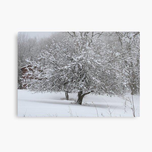 REDREAMING WINTER TREE Metal Print