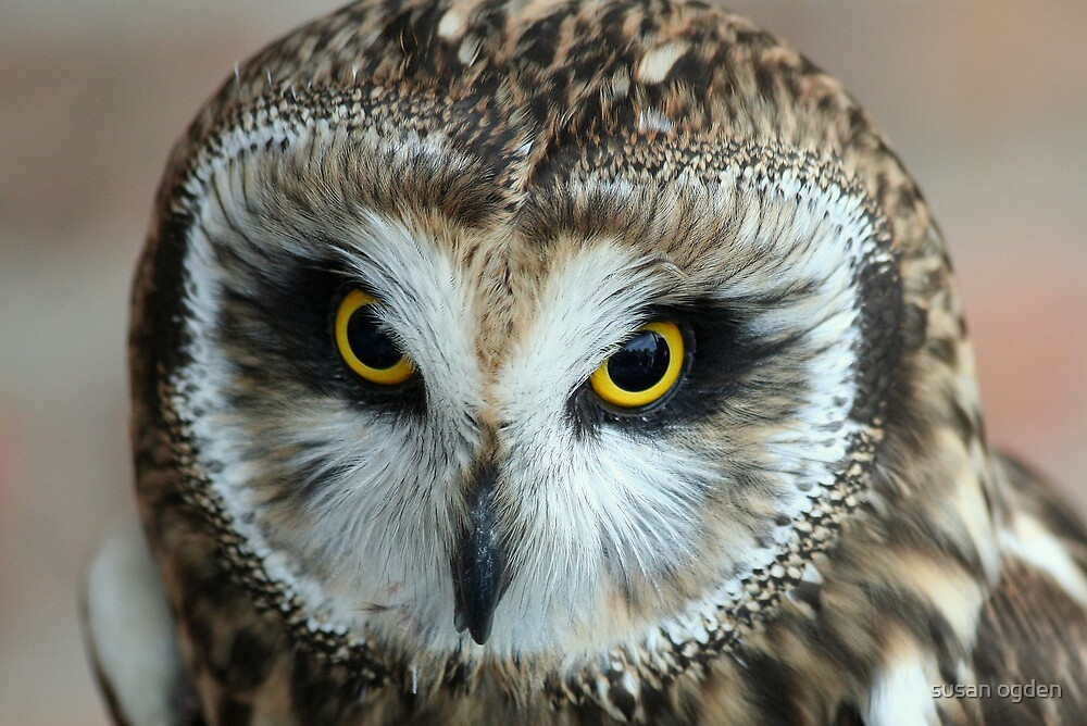 eyes to the soul by susan ogden