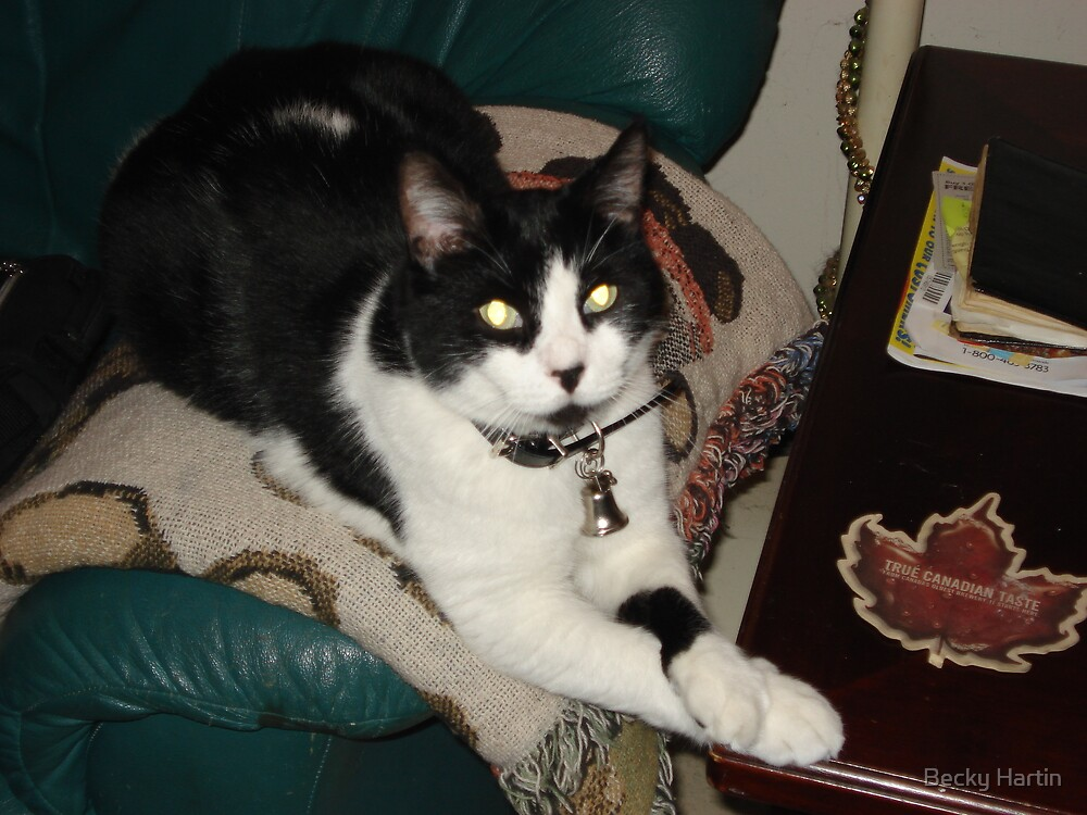 Loung'n Like A King in the Animal KINGdom by Becky Hartin