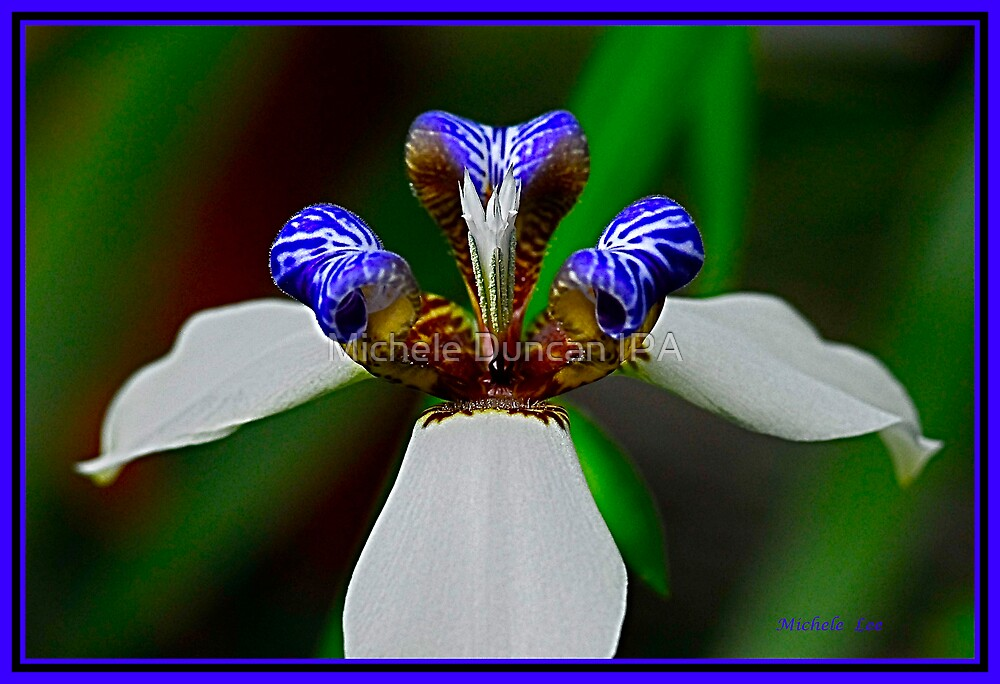 Hybrid Orchid In Blue by Michele Duncan IPA