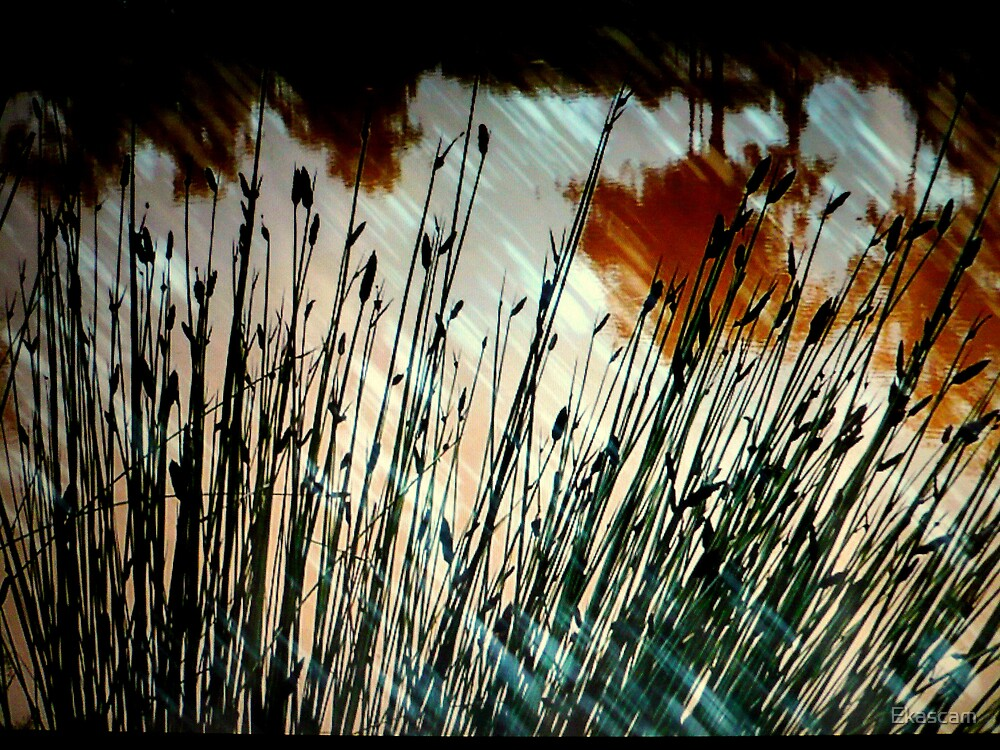 REEDS, RAIN, & REFLECTION. by Ekascam