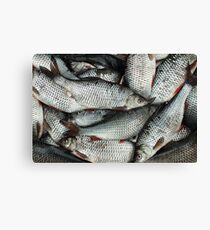 catch roach successful fishing Canvas Print