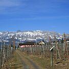 Alpine Wine by BigAl1