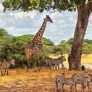 Safari Serengeti by Linda Gregory