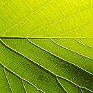 Wild Vine Leaf 1 by RoxxieDrox