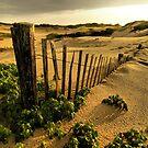 Provincetown Dunes by Philip James Filia