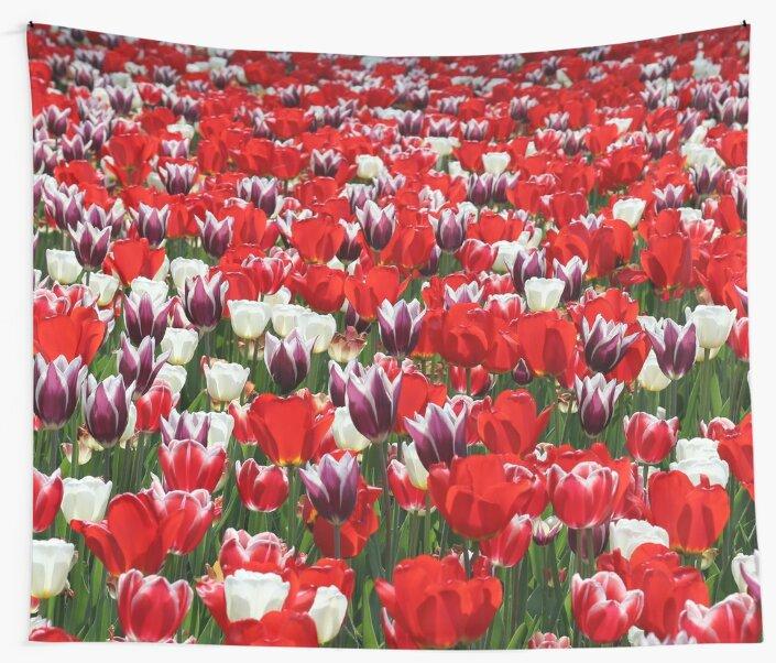 Tulip Sensation by ArtistPride