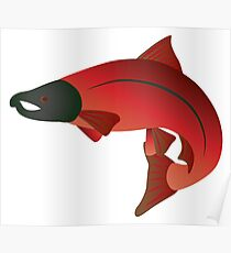 Coho Salmon Color Illustration Poster
