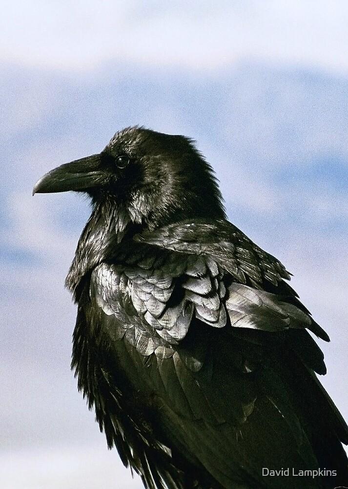 The Raven by David Lampkins
