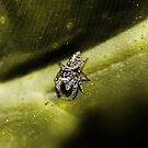 Eine Ipsy Bitsy Spinne von Evita
