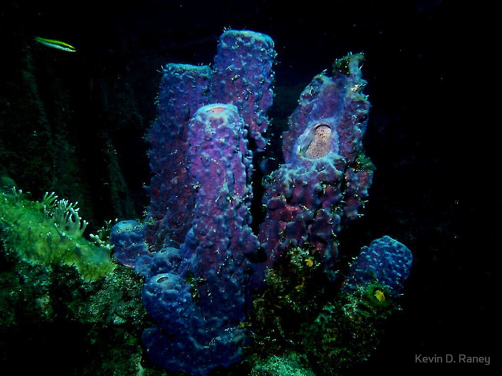 Coral by Kevin D. Raney