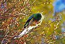Australischer Papagei von Evita