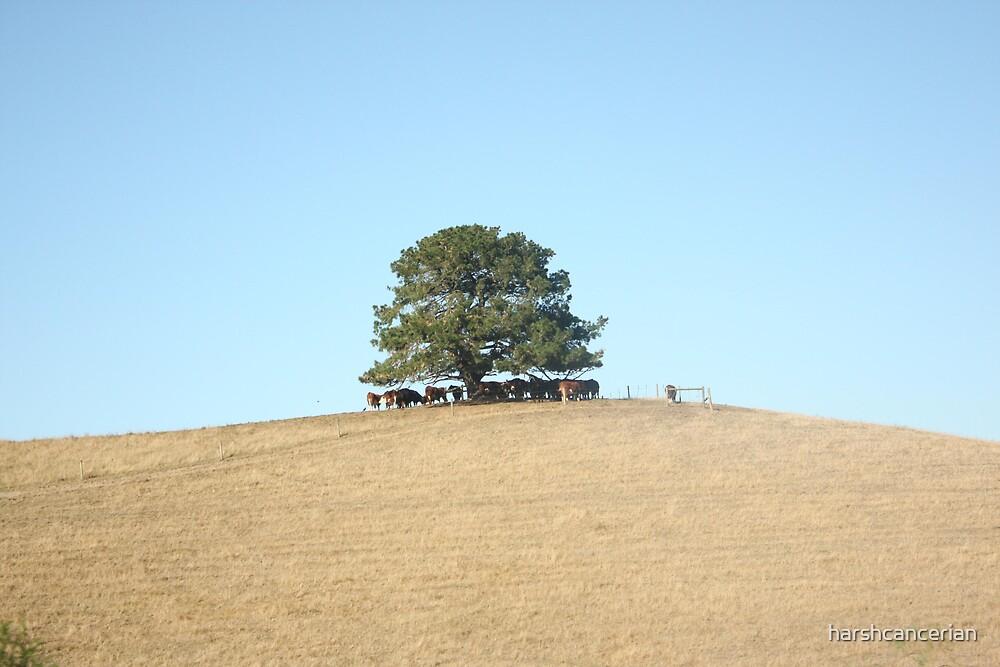 Lone Reed  by harshcancerian