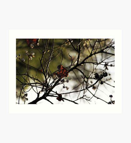 Still Hanging-Winter Series- Kunstdruck