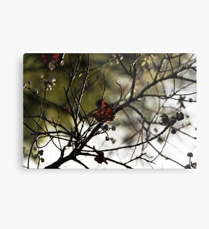 Still Hanging-Winter Series- Metalldruck