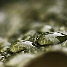 Regentropfen auf einem Blatt von Evita