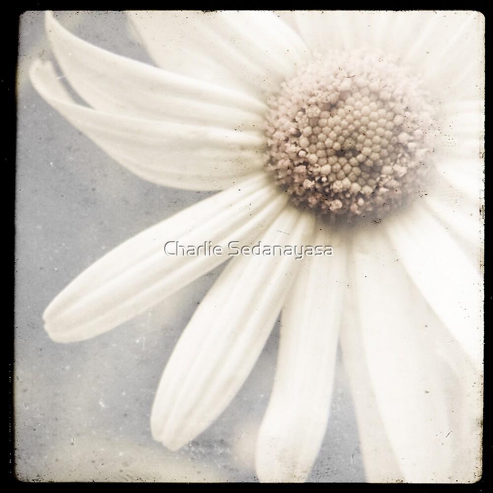 ...dreams... by Charlie Sedanayasa