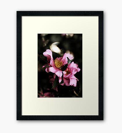 Camellias In The Rain Framed Print