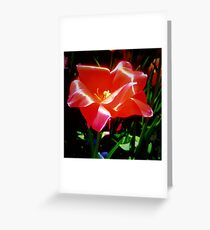 Bright Coral Tulip Greeting Card
