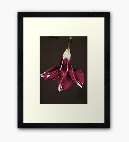 Flower In A Garden Framed Print
