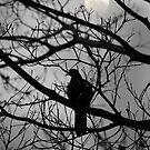 Flüstert unter dem Mondlicht von Evita