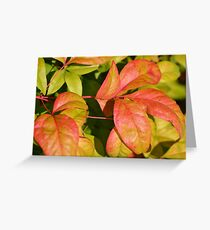 Tropical Pink Sunset Leaves  Greeting Card