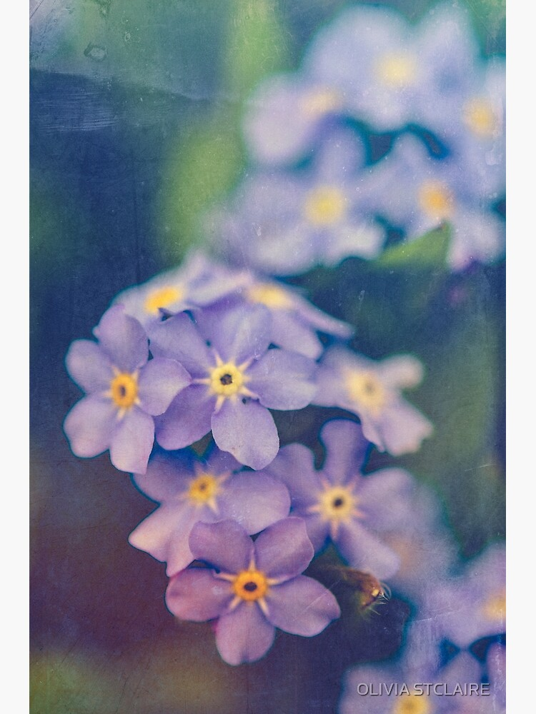 Forget Me Not by oliviastclaire