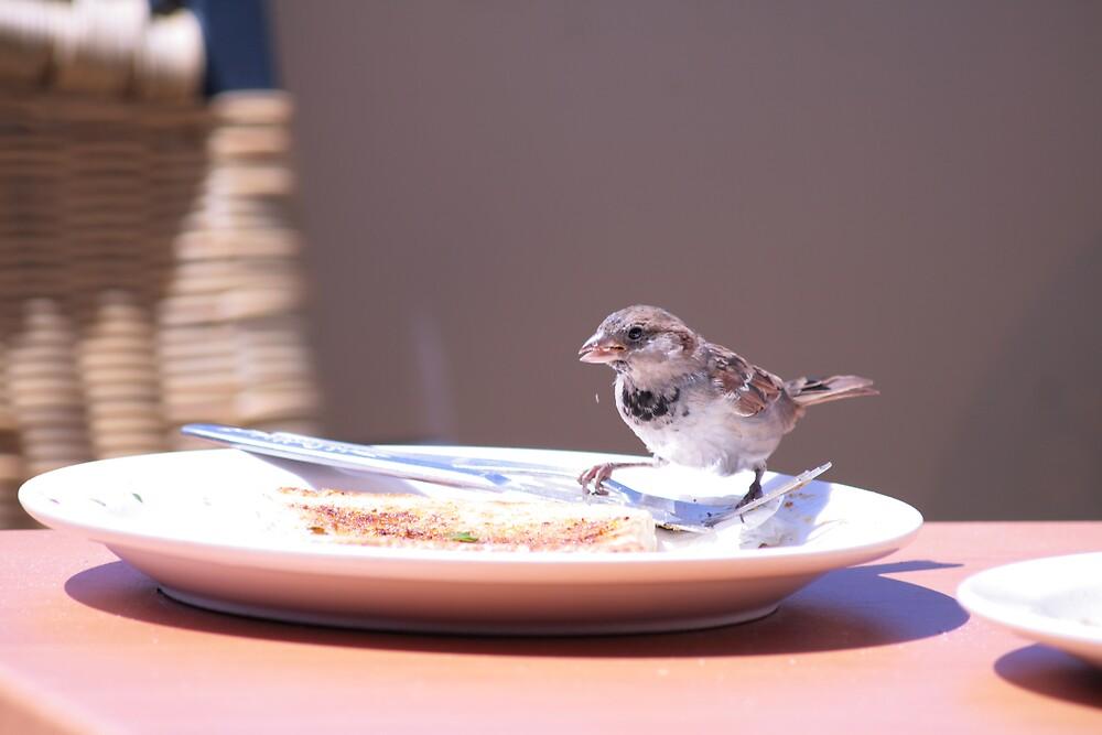 bird having a feed by ewboraine