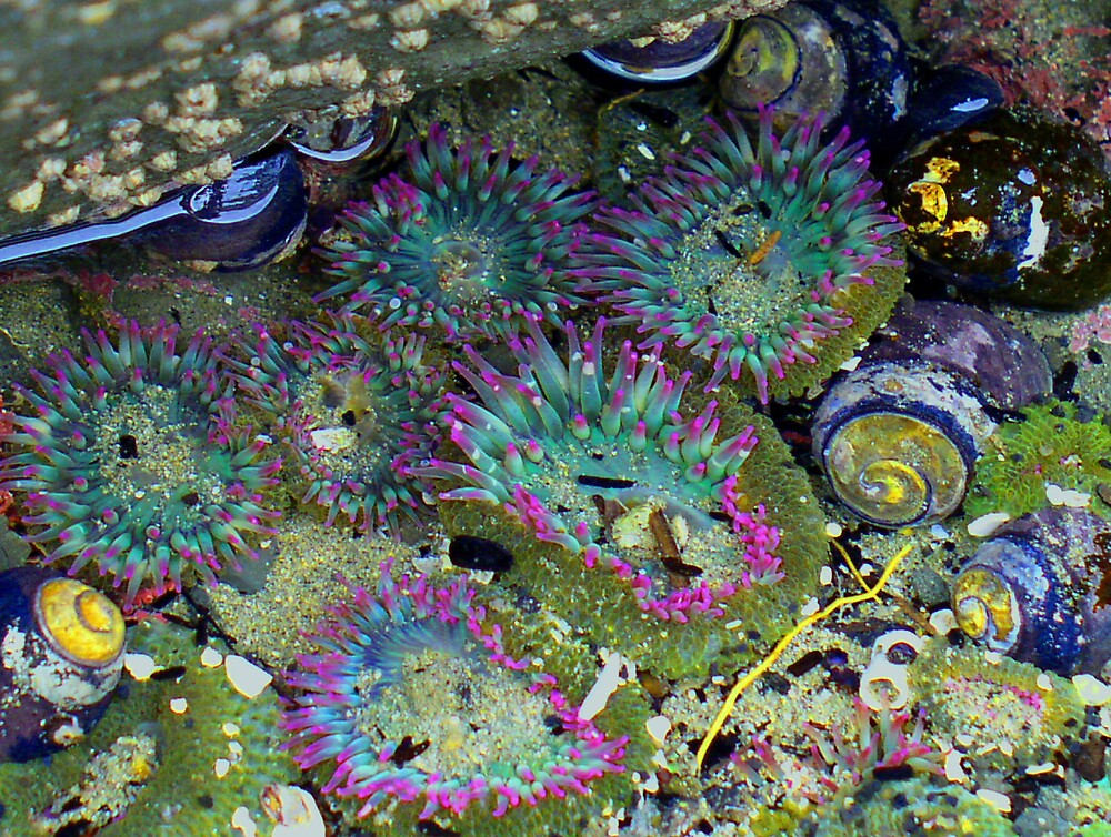 Sea Creatures by Zolton