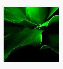 The Aloe wave Photographic Print
