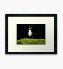 A Single Snowdrop Framed Print