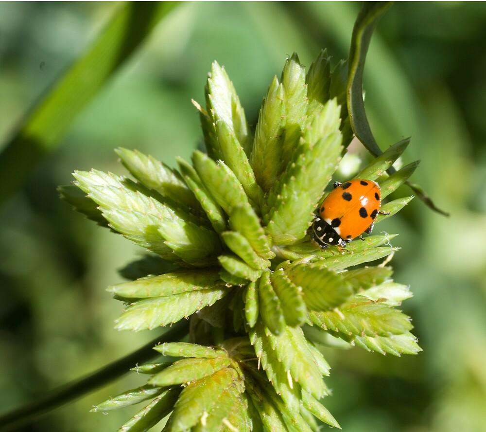 Lady Bug by jlc9175