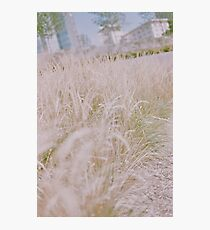 Waving Grains in the City Photographic Print