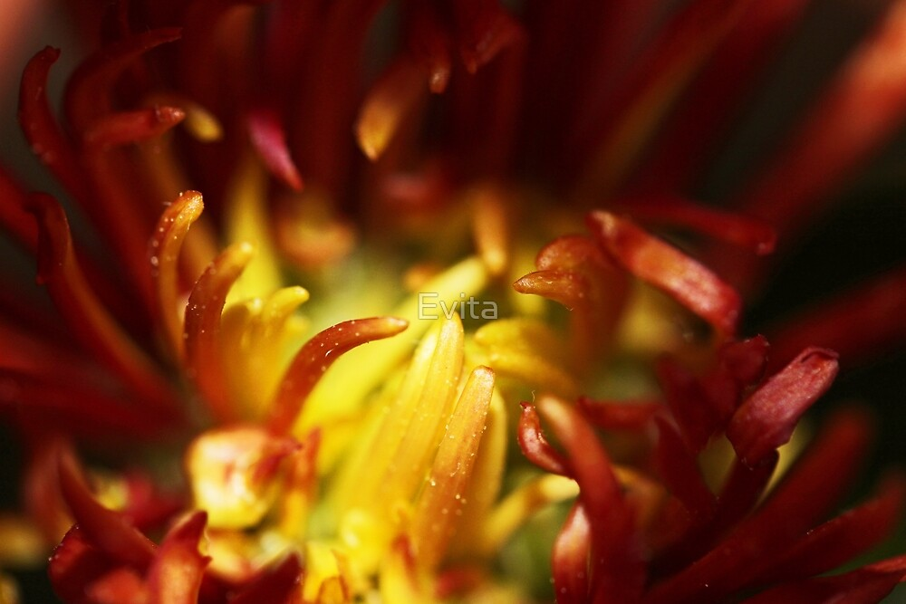 Yellow and Red by Evita
