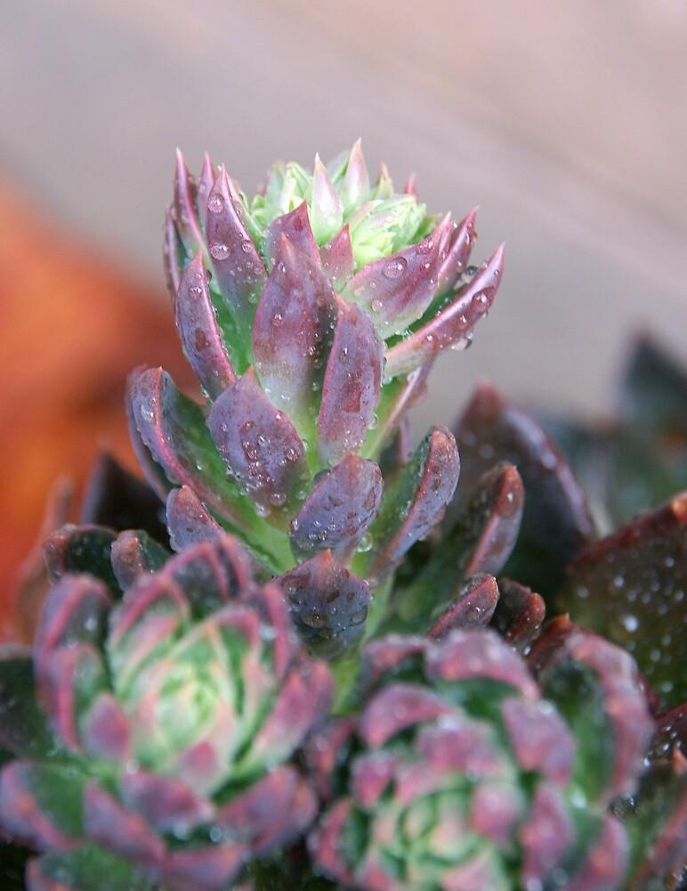 Cactus by Deidre Cripwell