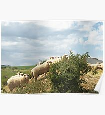 Here's Lookin' at Ewe Poster