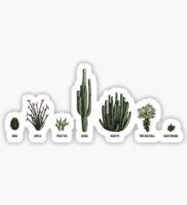 Sonoran Cacti Sticker